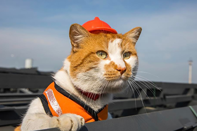 Ахилл стал самым популярным котом