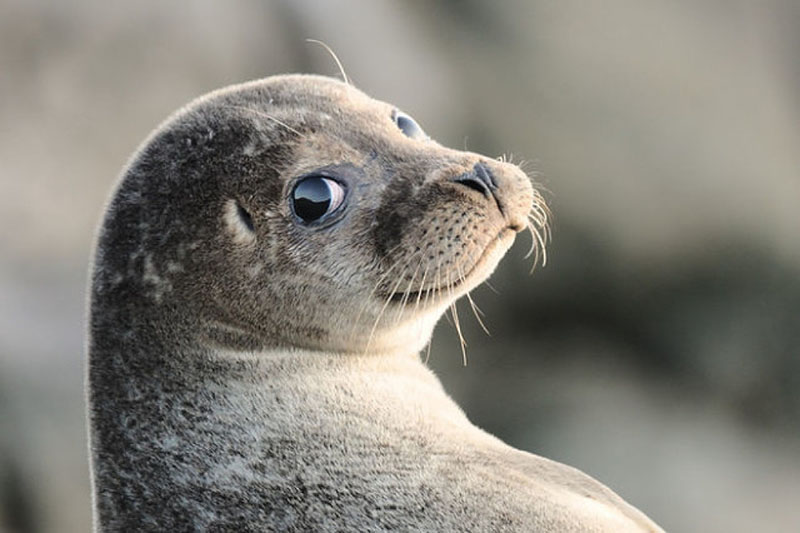 Тюлень, который живет под мостом