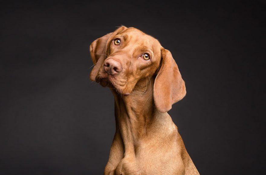 Собака1